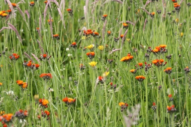 The fox-and-cubs in the meadow.